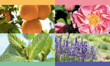 aromaterapia 4 živly