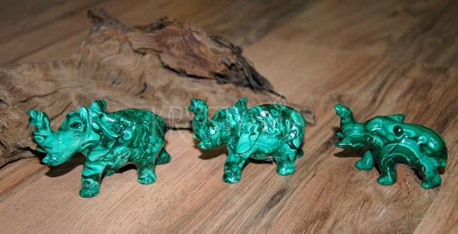 malachitoví sloníkovia